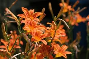 Blumengedöns Hessen (1)
