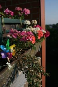 Blumengedöns bei Oma (1)