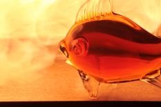 Flammenfisch (7)